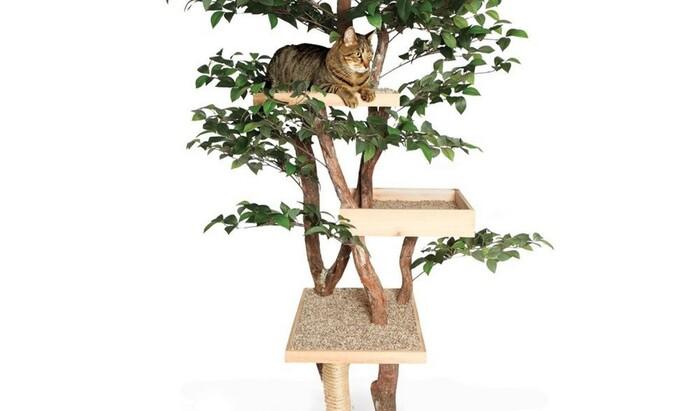 Жить «на широкую лапу»: самая дорогая мебель для котов и кошек
