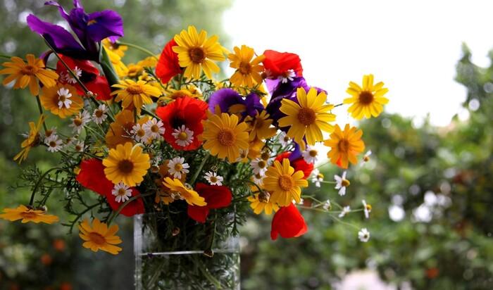 Простая панацея: могут ли цветы в доме сделать нас здоровее и счастливее?