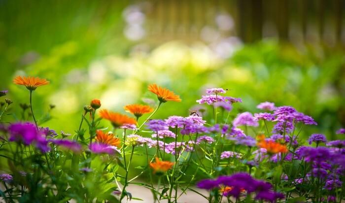 Ландшафтный дизайн и садоводство: 7 ведущих трендов в 2016 году