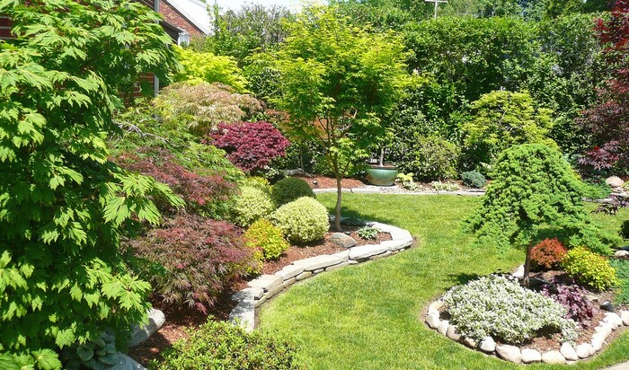 Кленовый сад в Огайо – десяток деревьев на маленькой территории