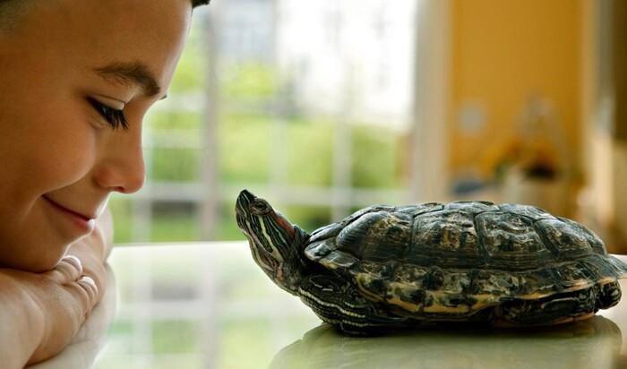 Мозговой штурм: какое имя выбрать для черепахи