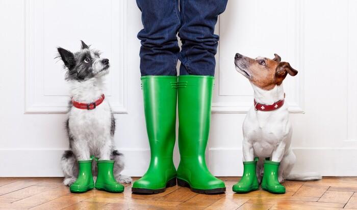 Домашние животные и природные катастрофы: как быть и что делать