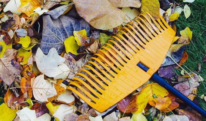 Как ухаживать за газоном осенью: 7 основных советов
