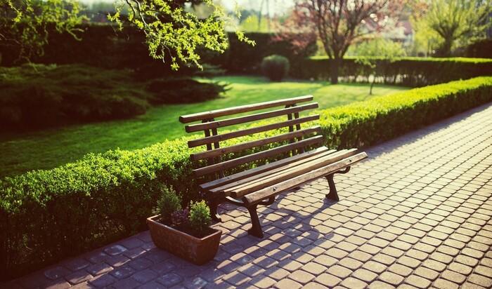 Бирючина в дизайне сада: что нужно знать о кустарнике