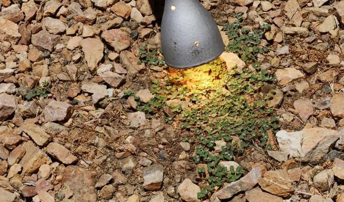Как победить сорняки без гербицидов? NatureZap - новое устройство