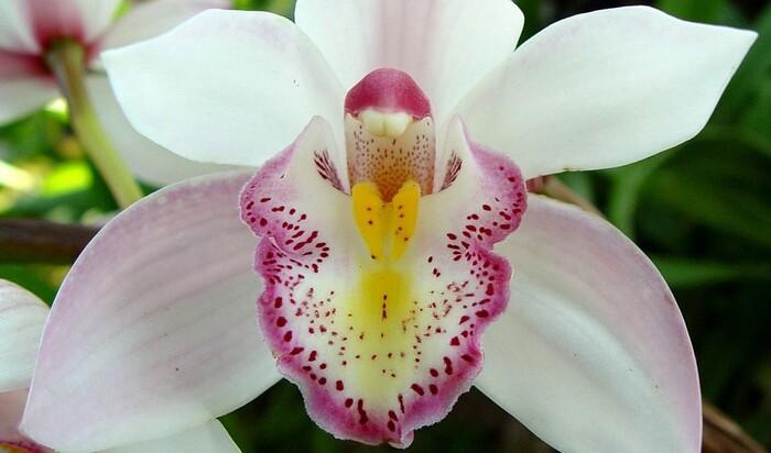 Красота требует денег: 5 дорогих цветов со всего света