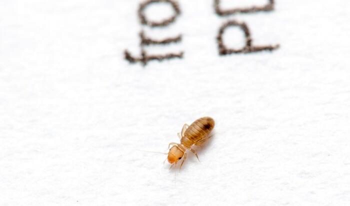 Дома богатых и знаменитых кишмя кишат всем, даже незваными насекомыми