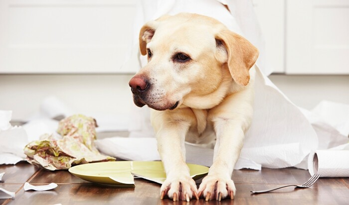 Наши дома – потенциальные убийцы домашних животных