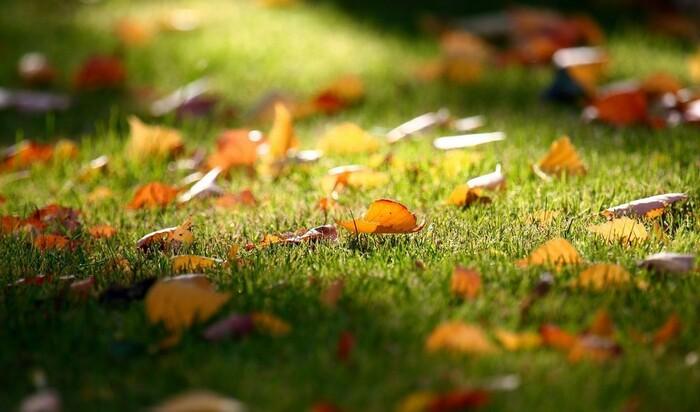 Как использовать опавшие листья осенью? 7 вариантов
