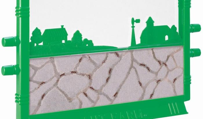 Муравьи дома: кого выбрать, где поселить и как ухаживать