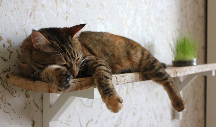 Домашний уют по-кошачьи. Домики и «лазалки» для кошек