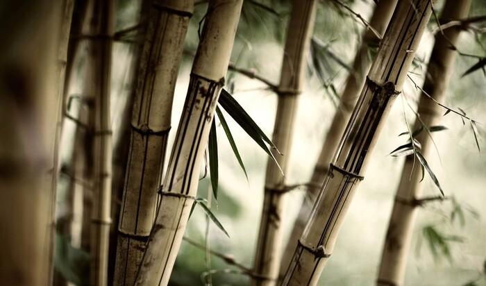 Бамбук в интерьере: необычный материал для эксклюзивного декора