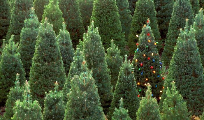 Какие новогодние ёлки могут создать в доме праздничное настроение?