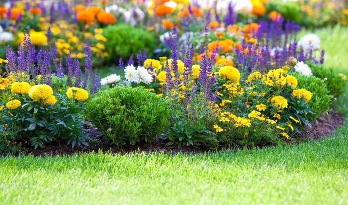 Миксбордеры в ландшафтном дизайне: схемы и подбор растений