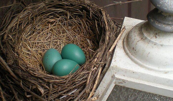 Когда и как пора избавиться от гнезда на даче?