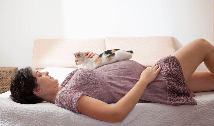 Чувствуют ли коты беременность: чего стоит ожидать от питомца?