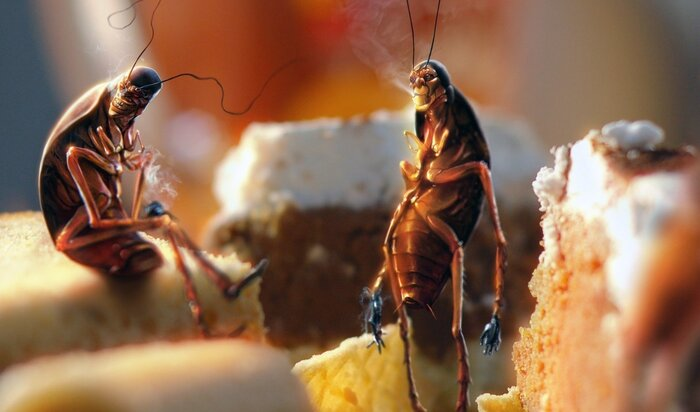 Шок: у тараканов есть личность