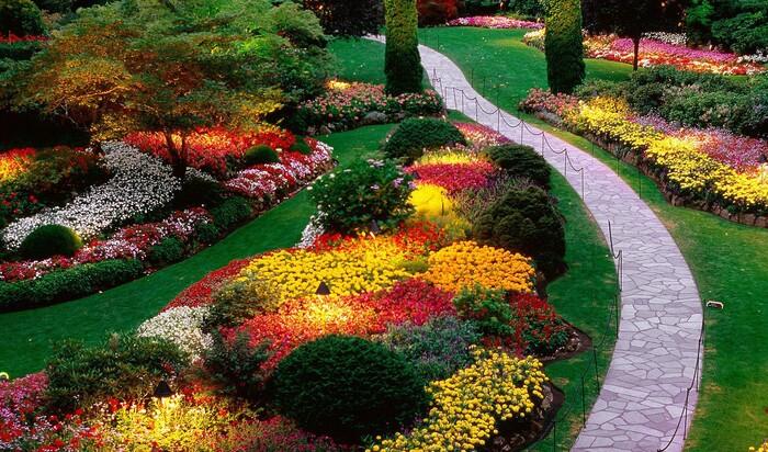 Цветы для позднего лета: что можно посадить в августе и сентябре?
