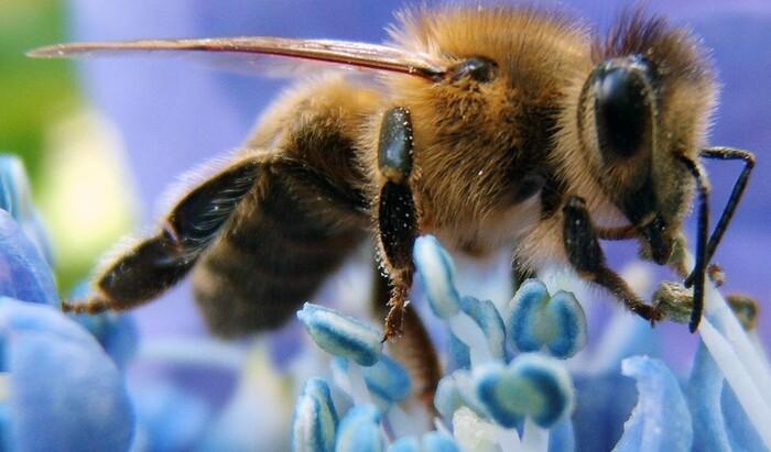 Пять полезных насекомых для вашего огорода