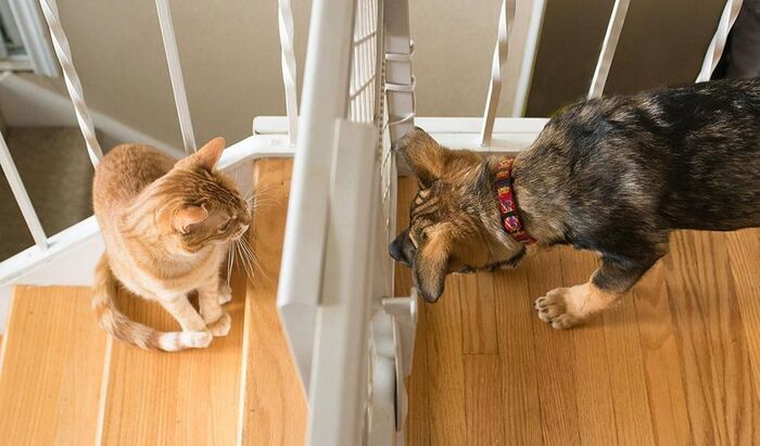 Кошки против собак: как научить животных сосуществовать вместе?