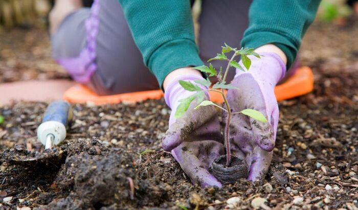 Садоводство – лучший фитнес-тренер?