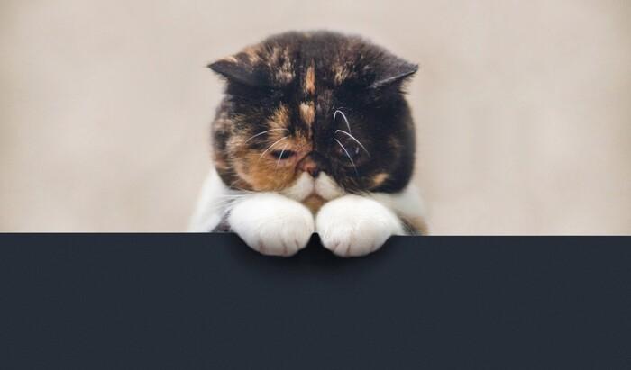 Как понять, что ваш кот грустит?