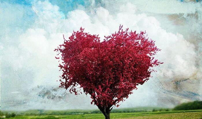Когда лучше сажать деревья: весной или осенью?