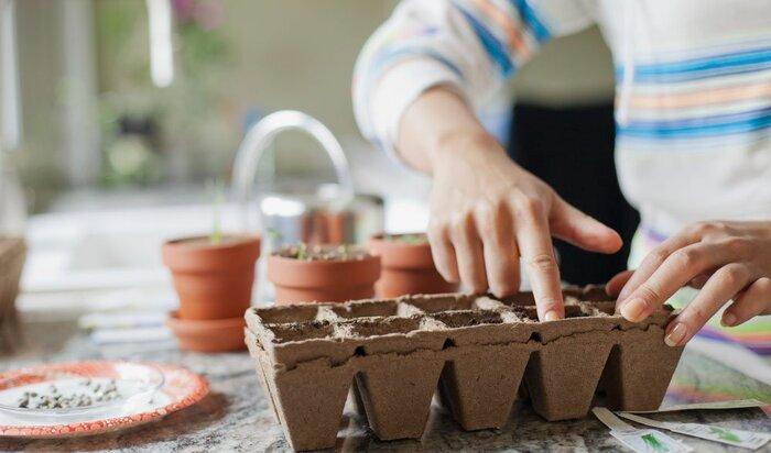 5 самых страшных ошибок при выращивании овощей в саду