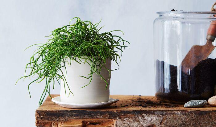 Ваши цветы, случайно, не при смерти? 8 способов убить горшечное растение