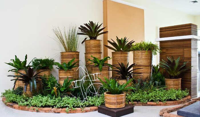 Комнатные растения, неприхотливые к степени освещенности