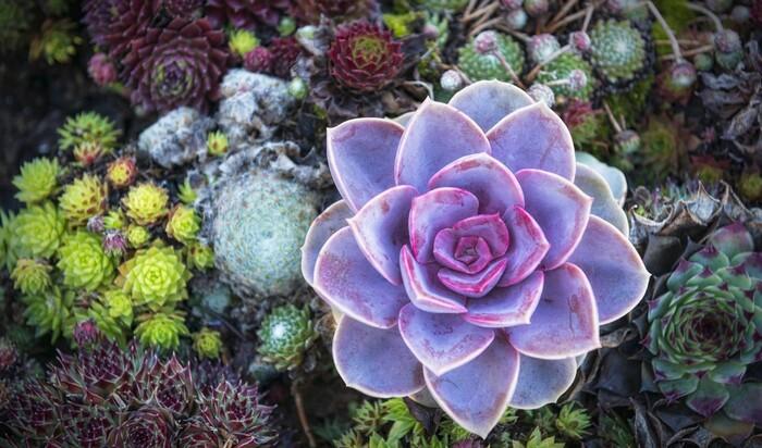 10 самых подходящих кактусов, которым найдется место в саду