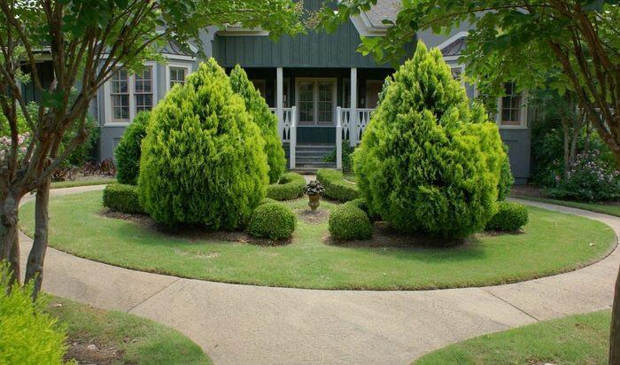 Какие деревья предпочтительней всего сажать возле дома?