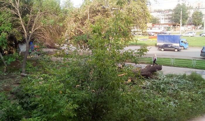 Заявление на спил деревьев возле дома: в каких случаях подавать?