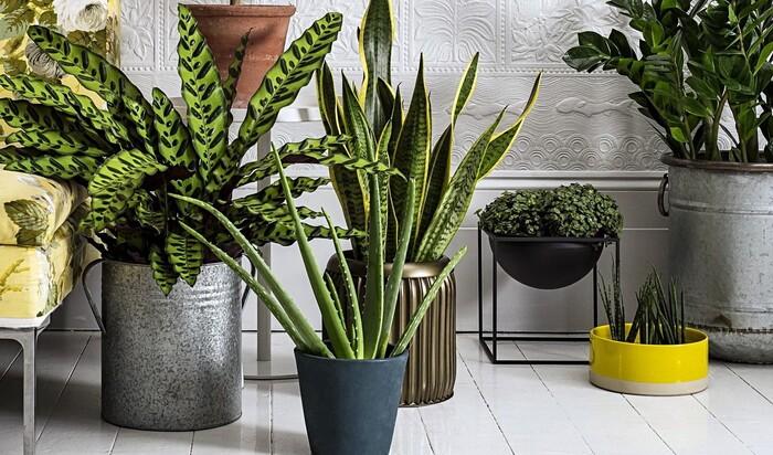 Комнатные растения, которые отлично процветают в помещении