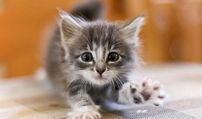 Как воспитать котенка: несколько советов