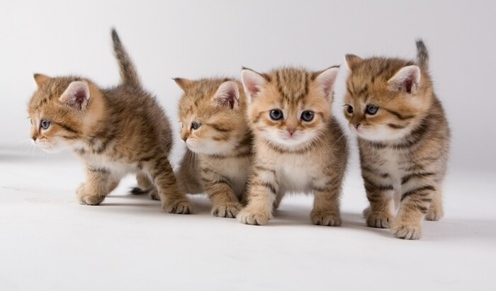 Как правильно выбрать котенка?