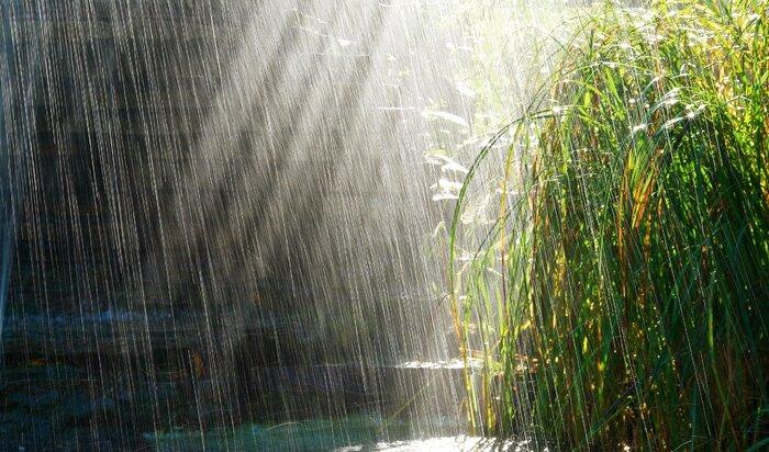 Налог на дождь: закон против непогоды