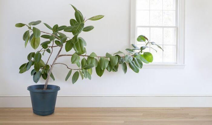 Комнатные растения, которые сохранят ваш дом в прохладе