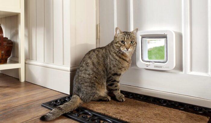 Дверца для кошки: как сделать своими руками?