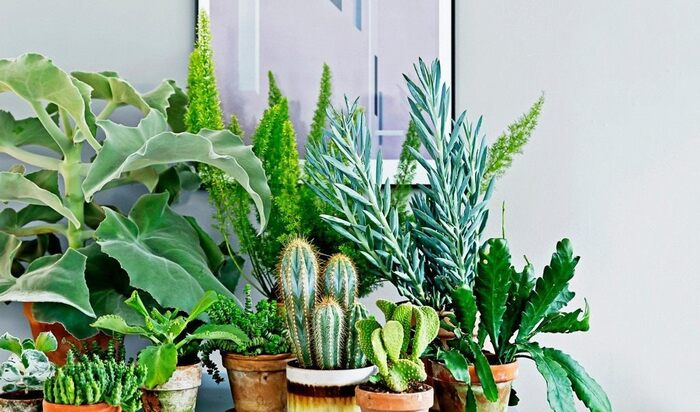 Топ 10 самых неприхотливых растений для дома