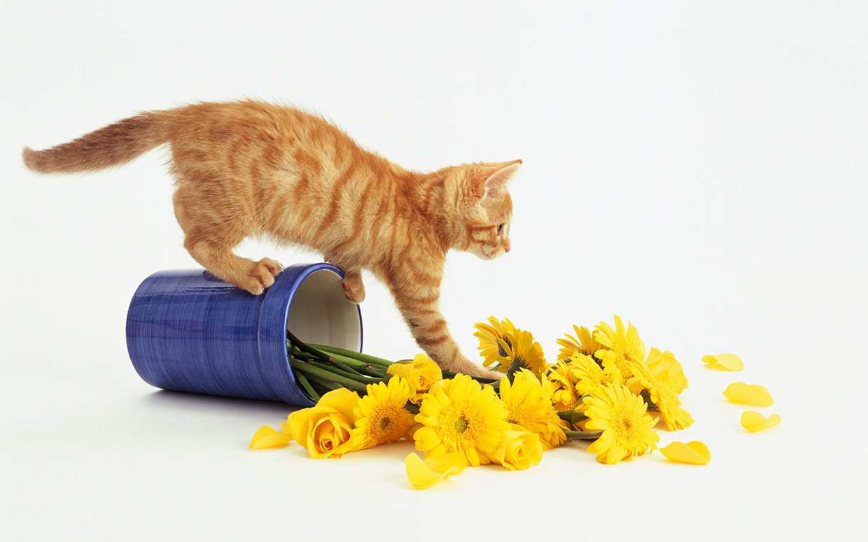 stop your cat from peeing on the rug