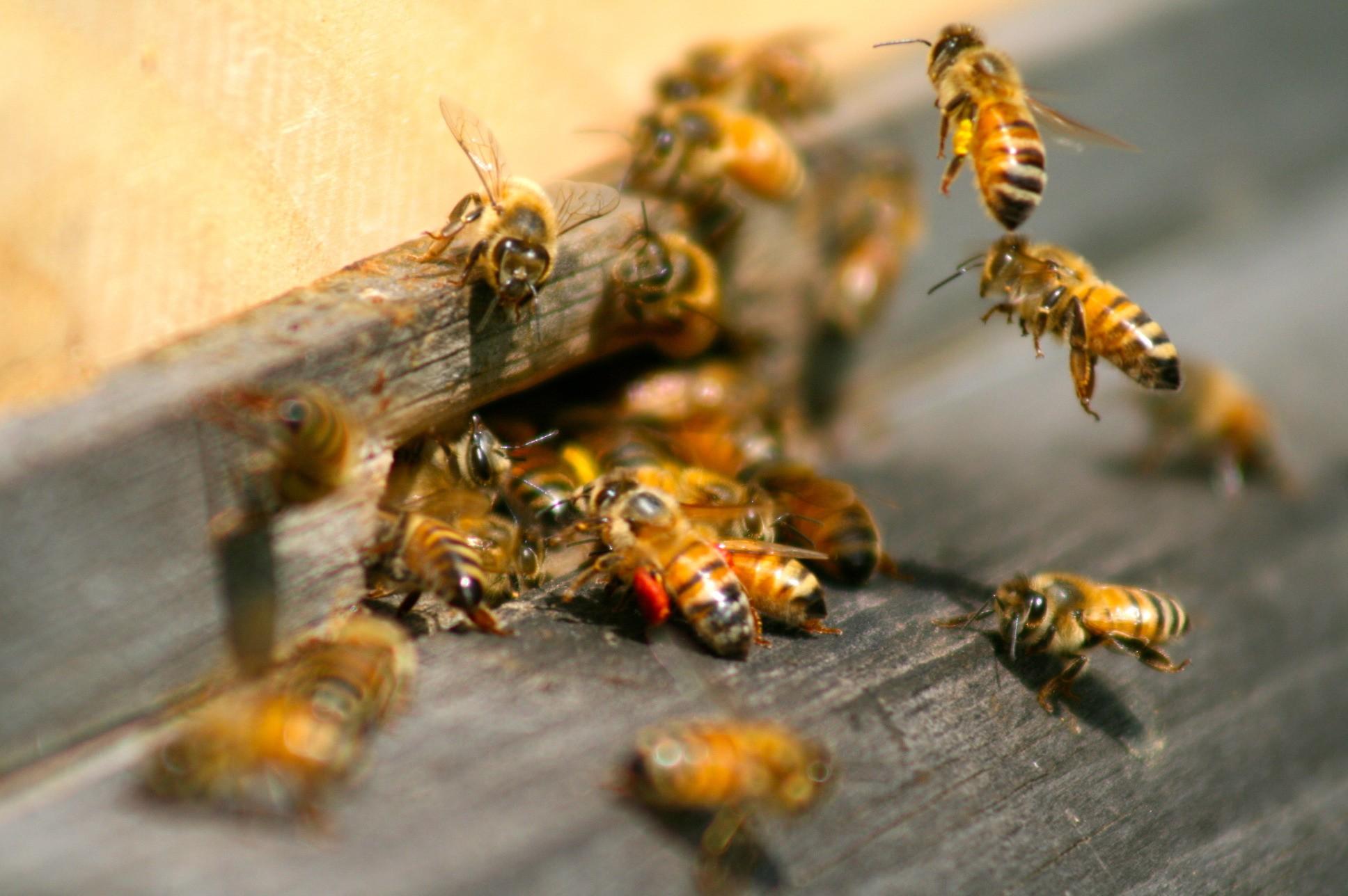 Как сделать чтобы пчелы не летали на участок