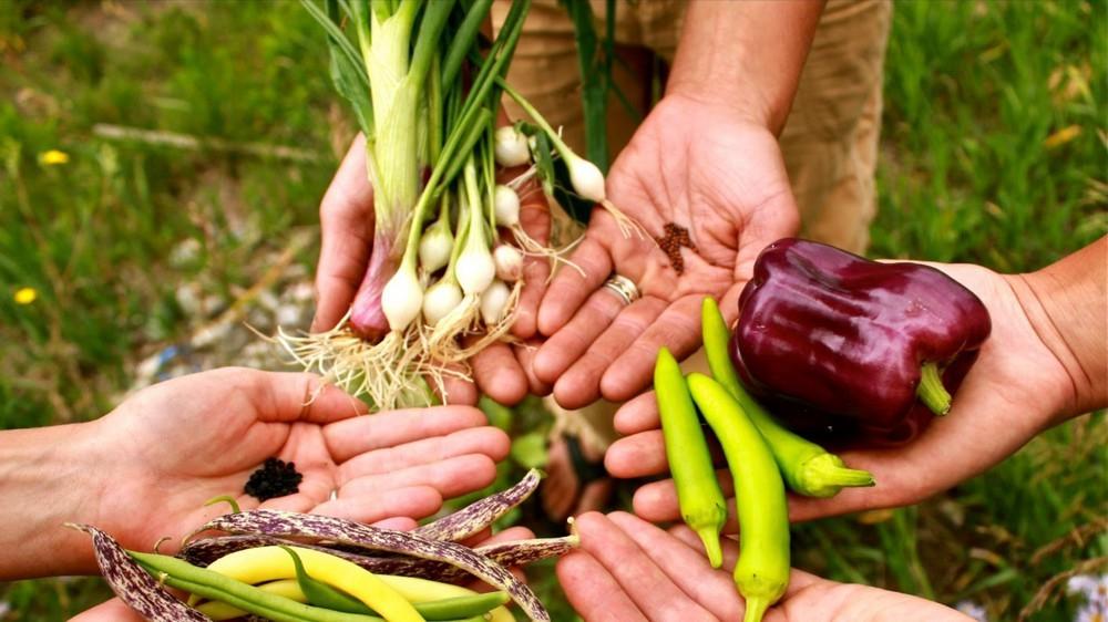 Какие овощи можно сажать в августе 64