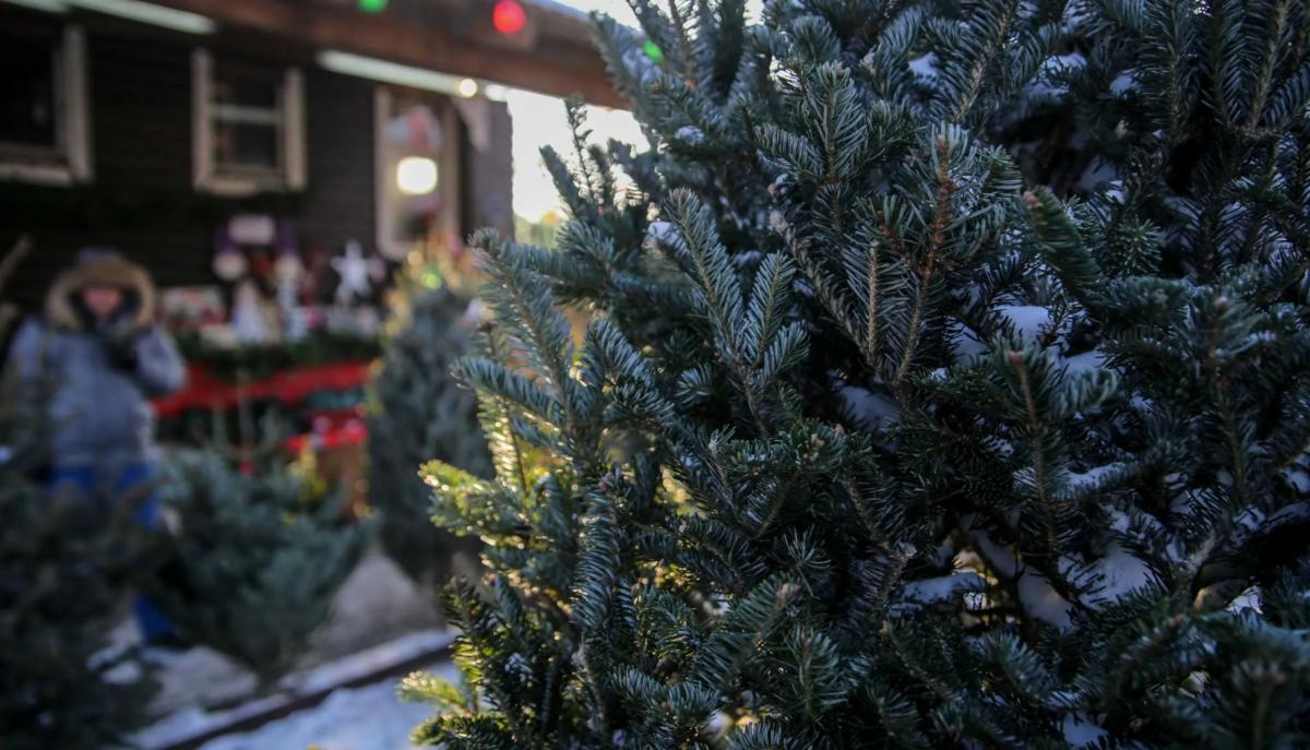 Приобрести новогодние ели костромичи смогут на пяти площадках города