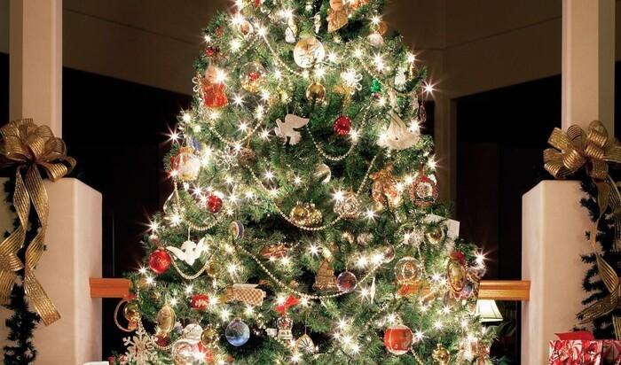 Новогодняя ель: настоящая или искусственная